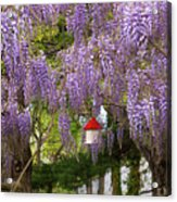 Flower - Wisteria - A House Of My Own Acrylic Print by Mike Savad
