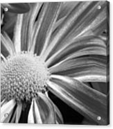 Flower Run Through It Black And White Acrylic Print by James BO  Insogna