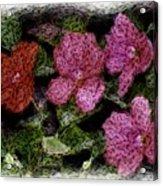Flower Sketch Acrylic Print by David Lane