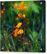Flowers In The Woods At The Haciendia Acrylic Print by David Lane