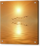 Flying South Acrylic Print by Wim Lanclus
