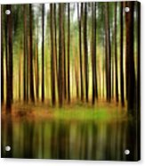 Forest Abstract Acrylic Print by Svetlana Sewell