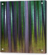 Forest Abstract02 Acrylic Print by Svetlana Sewell