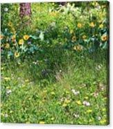Forest Flowers Landscape Acrylic Print by Carol Groenen