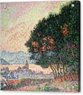 Forest Near St Tropez Acrylic Print by Paul Signac