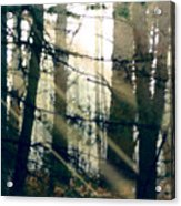 Forest Sunrise Acrylic Print by Paul Sachtleben