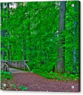 Forest Walk Acrylic Print by Kevin Hill