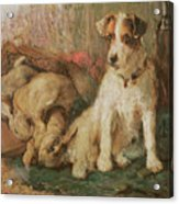 Fox Terrier With The Day's Bag Acrylic Print by English School