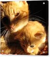Foxy And Cutters Acrylic Print by Barbara Marcus