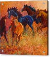 Free Range - Wild Horses Acrylic Print by Marion Rose