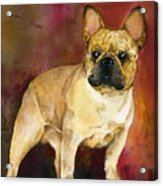French Bulldog Acrylic Print by Kathleen Sepulveda