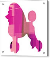 French Poodle Acrylic Print by Naxart Studio