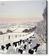 Friesians In Winter Acrylic Print by Maggie Rowe