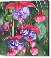 Fuchsia Trio Acrylic Print by Tina  Sander