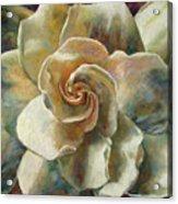 Gardenia Acrylic Print by Billie Colson