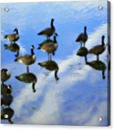 Geese Lake Reflections  Acrylic Print by Randy Steele