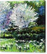 Germany Baden-baden Spring 2 Acrylic Print by Yuriy  Shevchuk