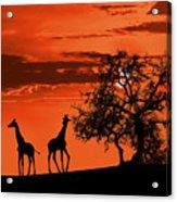 Giraffes At Sunset Acrylic Print by Jaroslaw Grudzinski