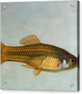 Go Fish Acrylic Print by James W Johnson
