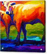 Golden Beauty - Cow And Calf Acrylic Print by Marion Rose