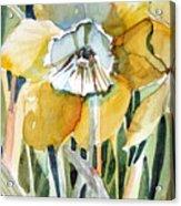 Golden Daffodil Acrylic Print by Mindy Newman