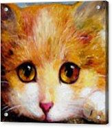 Golden Eye Acrylic Print by Shijun Munns