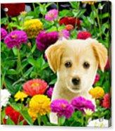 Golden Puppy In The Zinnias Acrylic Print by Bob Nolin