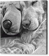 Golden Retriever Dog And Friend Acrylic Print by Jennie Marie Schell