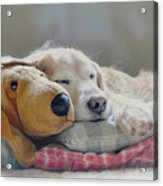 Golden Retriever Dog Sleeping With My Friend Acrylic Print by Jennie Marie Schell