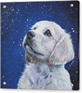 Golden Retriever Pup In Snow Acrylic Print by Lee Ann Shepard