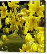 Golden Shower Tree Acrylic Print by James Temple