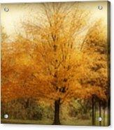 Golden Tree Acrylic Print by Sandy Keeton