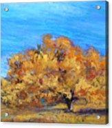 Golden Tree Acrylic Print by Susan Jenkins