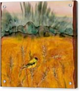 Goldfinch In The Wheat Acrylic Print by Carolyn Doe