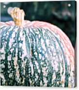 Gorgeous Gourd Acrylic Print by JAMART Photography