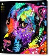 Gratitude Pitbull Acrylic Print by Dean Russo