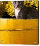 Gray Kitten In Yellow Bucket Acrylic Print by Garry Gay