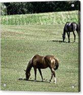 Grazing Horses Acrylic Print by John Greim