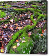 Green And Serene Acrylic Print by Thomas R Fletcher