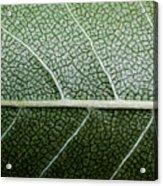 Green Leaf Geometry Acrylic Print by Ryan Kelly