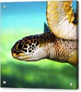 Green Sea Turtle Acrylic Print by Marilyn Hunt