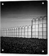 Greenhouse Acrylic Print by Dave Bowman