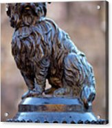 Greyfriars Bobby Acrylic Print by Andre Goncalves