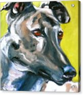 Greyhound Acrylic Print by Susan A Becker