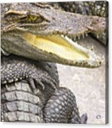 Group Of Crocodiles Acrylic Print by Jorgo Photography - Wall Art Gallery