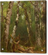 Group Of Trees Acrylic Print by Asher Brown Durand