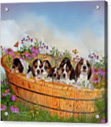 Growing Puppies Acrylic Print by Carol Cavalaris