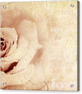 Grungy Rose Background Acrylic Print by Anna Omelchenko