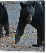 Guarding Her Cubs Acrylic Print by DigiArt Diaries by Vicky B Fuller