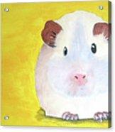 Guinee Pig Acrylic Print by Darren Stein
